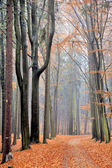 Autumn road in the forest — Stock Photo