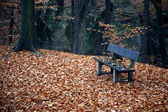 Bench in the forest in autumn — Stockfoto