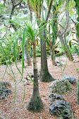 ヤシの植物園モナコで — ストック写真