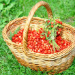 Basket of wild strawberries on grass in sunlight — Stock Photo #7956907