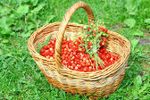 Basket of wild strawberries on the grass in sunlight — Stock Photo