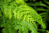 Fern leaf — Stockfoto