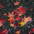 Maple leaves on the road — Stock Photo