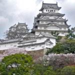 Постер, плакат: Himeji Castle during Sakura