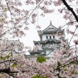Himeji Castle during Sakura - Stock Photo