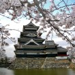 Matsumoto Castle with Cherry Blossoms - Stock Photo