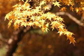 Fall in Japan — Stock Photo