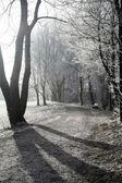 Pěšina v zimě — Stock fotografie