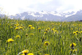 Lush Meadow in the Alps — Stock Photo