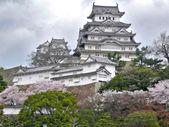 Himeji Castle during Sakura — Stock Photo