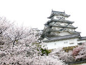 Japanese Castle during Cherry Blossom — Stock Photo