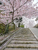 Cherry blossoms on stairs — Stock Photo