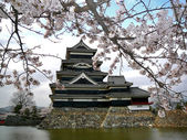Matsumoto Castle with Cherry Blossoms — Stock Photo