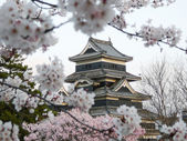 Matsumoto Castle during cherry blossom (Sakura) — Stock Photo