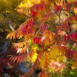 Autumn Background — Stock Photo #7776138