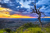 Dead Tree at Sunset — Stock Photo