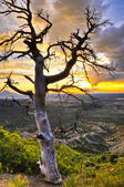 Dead Tree at Sunset — Stock Photo