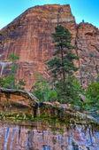 ザイオンの滝 — ストック写真