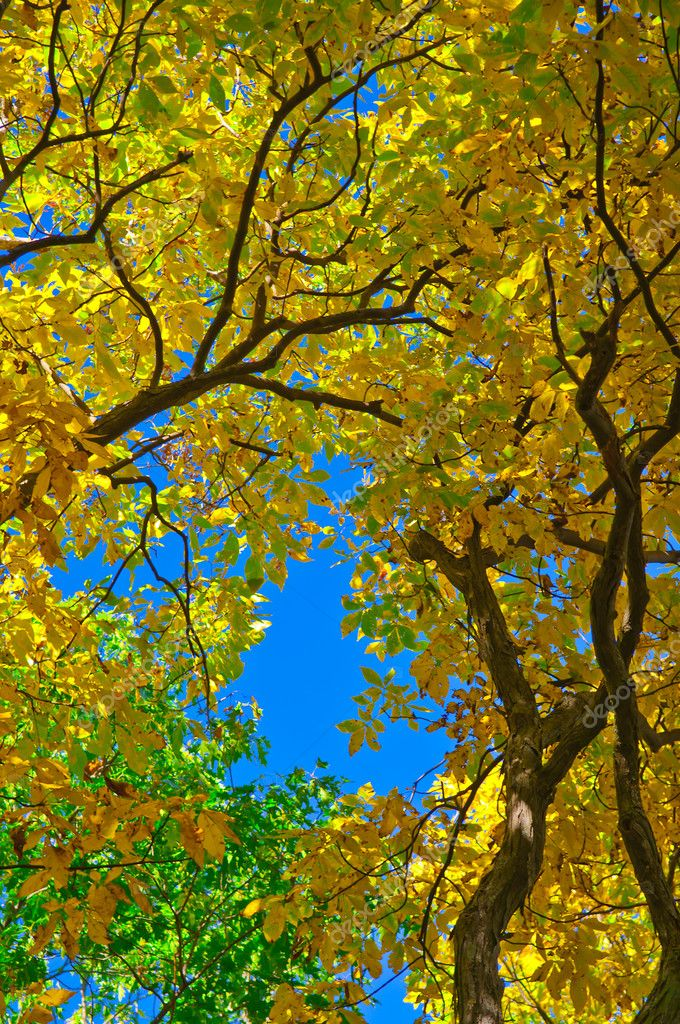 Colorful Bright Vibrant Leaves against blue sky — Stock Photo #7774743