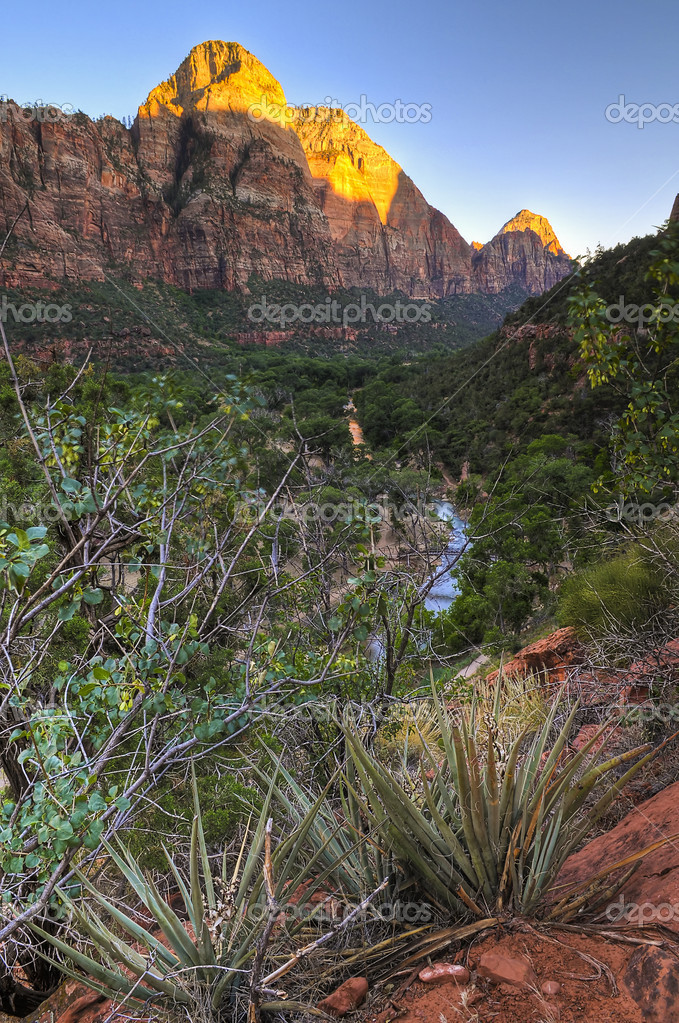 Cactus in Zion Canyon on the Emerald Pool Trail — Stock Photo #7775662