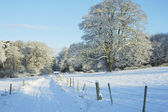 Country track, trees and meadow in the snow — Stock Photo