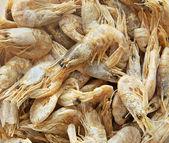 Dried prawns — Stock Photo