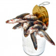 Lata con pescado - Stock Photo