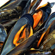Varios mejillones - Stock Photo