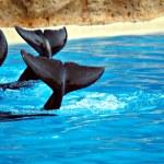 Delfines — Stock Photo