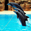 Stock Photo: Delfines