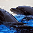 Delfines - Foto Stock