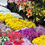 Flores — Stock Photo