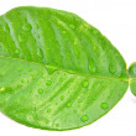 Hoja verde — Stock Photo #7793395