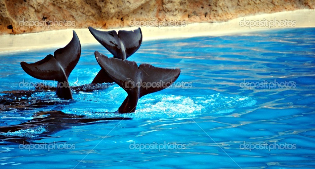 Delfines nadando en la piscina — Stock Photo #7791561
