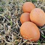 Varios huevos en la hierba — Stock Photo