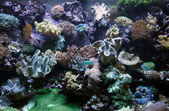 Seabed and corral reefs — Stock Photo