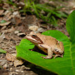 The frog is siting in the big green leaf - Stock Photo
