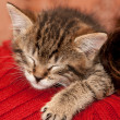 Sleepy Kitten — Stock Photo