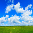 Green field and blue sky — Zdjęcie stockowe #7779230