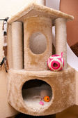 Small house for cats — Stock Photo