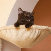 Funny cat in a basket — Stock Photo