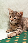 Tabby cat lying on bed — 图库照片