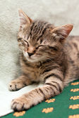 Tabby cat sleeps on bed — Stok fotoğraf
