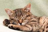 Tabby cat lying on bed — Stock Photo