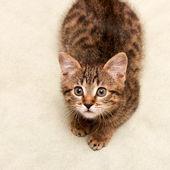Pręgowany kot leżący na łóżku — Zdjęcie stockowe