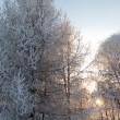 Frozen tree in a winter — Stock Photo