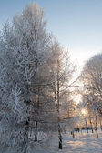 Bevroren boom in een winter — Stockfoto