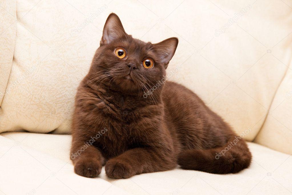 Grey brown cat