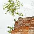 Stock Photo: New life tree grows from stone