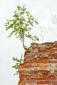 Nytt liv träd växer från en sten — Stockfoto